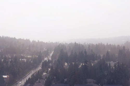 misty bellevue