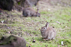 2011-01-30-15h49m20.272P6953 (A.J. Haverkamp) Tags: zoo rotterdam blijdorp misc dierentuin diergaardeblijdorp canonef70200mmf28lisusmlens httpwwwdiergaardeblijdorpnl