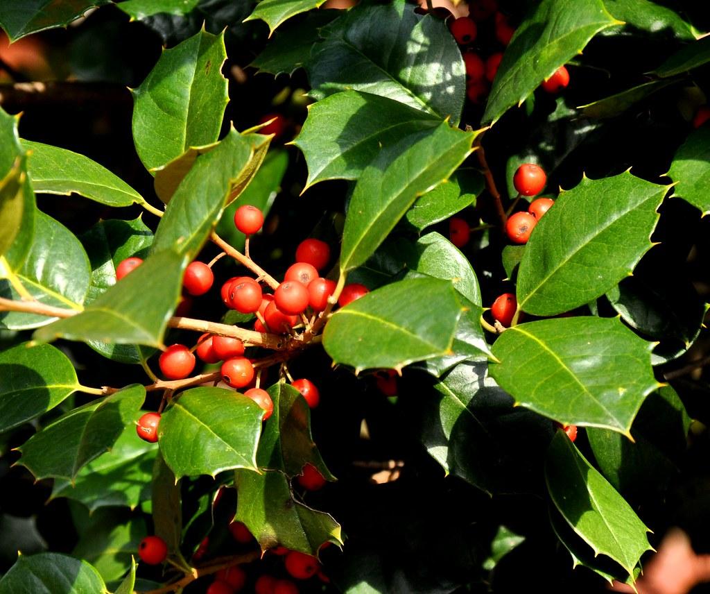 100 maryland fruit trees sunrise lime tree fantastic citrus