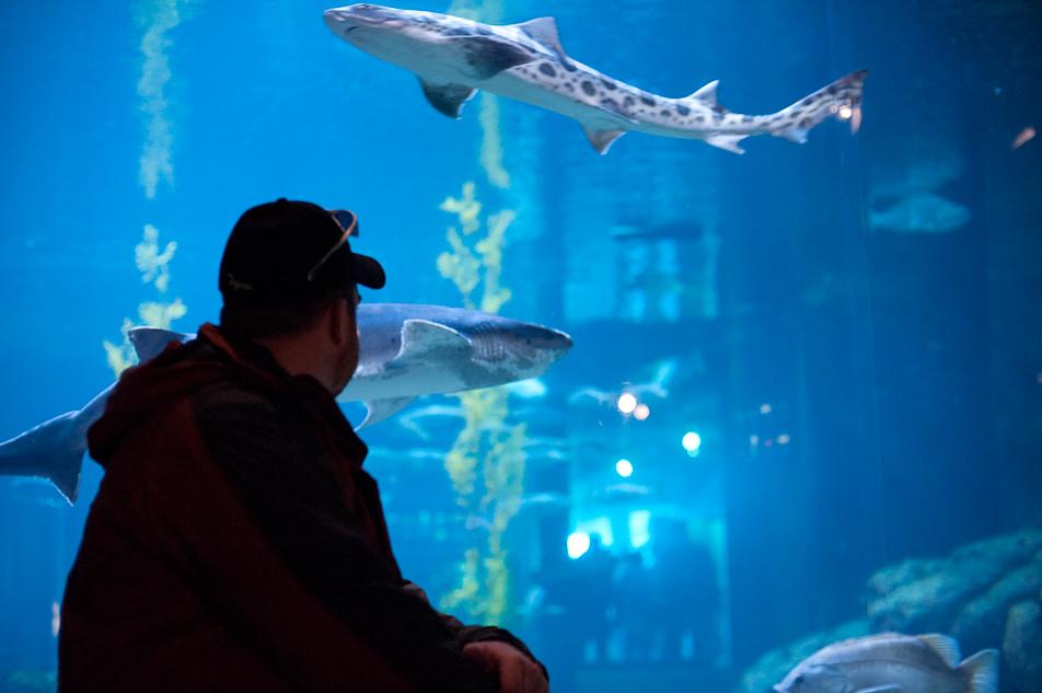 Shark Communing