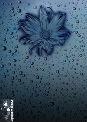 Not an abstract thing 20 (rogueslr) Tags: flower rain photoshop canon droplets 50d cs5