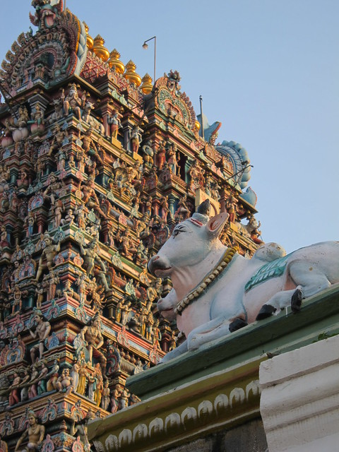Kapaleeshwarar Temple: Cow and gopura