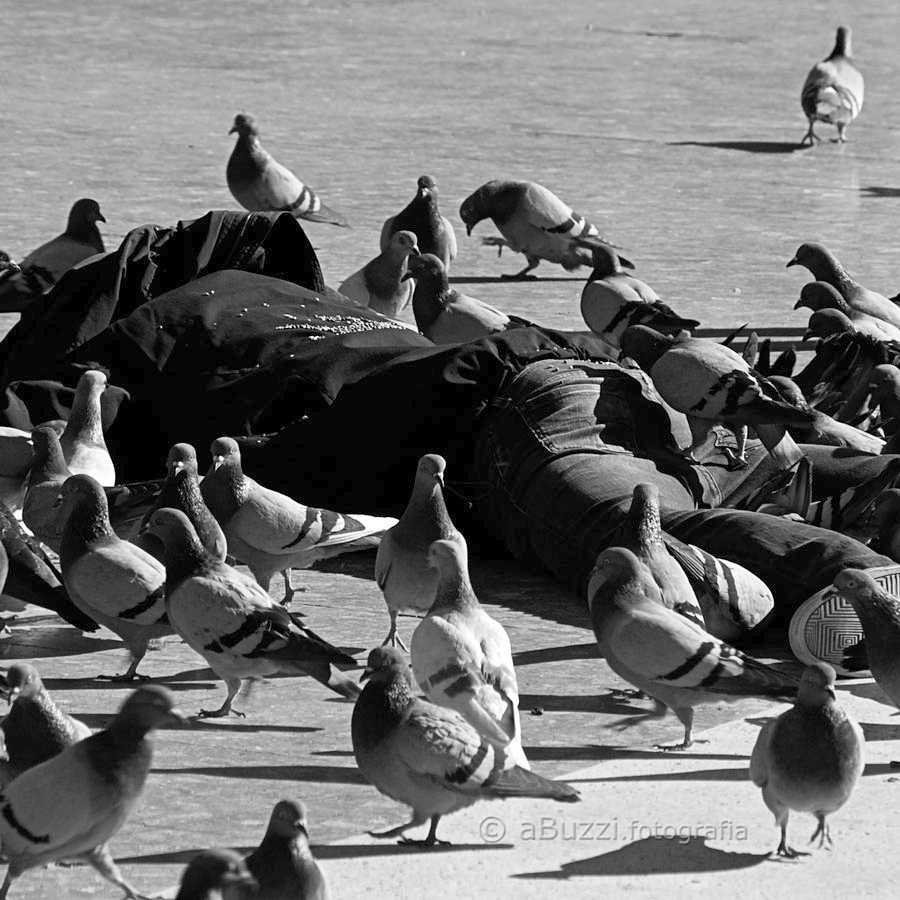 els ocells de hitchcock