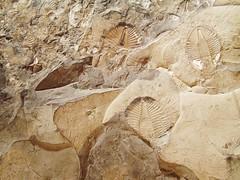 Trilobite   Ontario   Canada   1797.jpg (ShutterStone.com) Tags: ontario canada trilobite 1797jpg