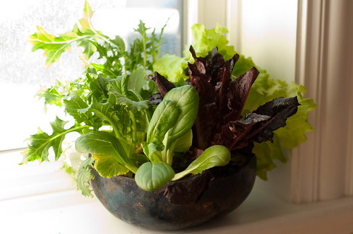 live salad greens in window sill