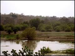 Mole Park watering hole (Mazetta) Tags: ocean africa park trees sea guinea gulf view north atlantic safari national ghana mole