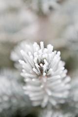 cold (Fjola Dogg) Tags: schnee winter sky snow macro landscape iceland islandia frost nieve sneeuw neve neige alpha lumi  sn nix kar sland sn islande 2010 sne nieg snjr vetur izland flowersplants  islanda islndia    ijsland islanti    tuyt    sneachta neo bor izlanda     gwladyri anoslainn   lislande fjoladogg nj        islann