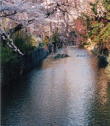 shirakawa creek blog20101230_5091