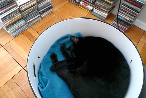 cat, box