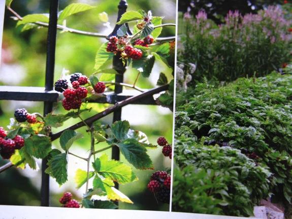 martha stewart gardening 006