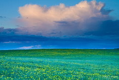 Yolo (Kevin English Photography) Tags: california flowers sunset storm green field yellow clouds canon landscape eos is farm hills usm efs yolo 1755mm kevinenglish ambientfocus