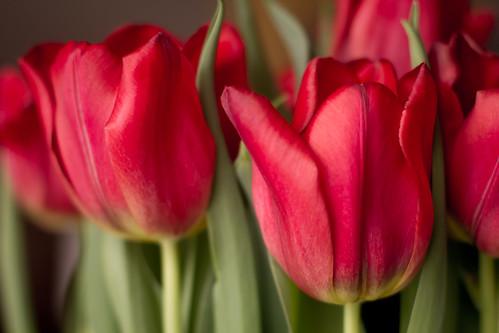 flowers-1784.jpg