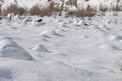 Verschneite Felsblöcke oberhalb der Baumgrenze (Ruedi_F) Tags: lötschental langgletscher fafleralp lötschenlücke