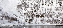 Skiing to the sea (Svinya Rorbuer) Tags: ski vinter rib fisk svinya trollfjorden
