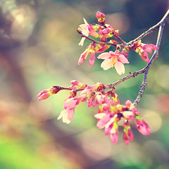 The flowers have arrived... (eRachel11) Tags: flowers spring nikon bokeh blooming d7000 nikond7000