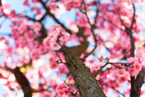 spring2-0167