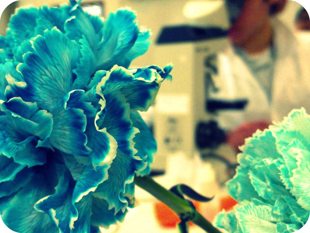 a aula da Ana deu flor