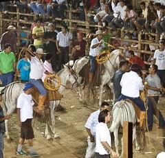 Fiesta Patronal de Santo Cristo (BushmanW12) Tags: horses santacruz festival cowboys costarica fiesta bull bullfight