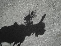 Chevrette (Michel Etter) Tags: street shadow urban black art painting poster photography switzerland photo suisse photos swiss ghost ombra dessin ombre shade silueta tradition tableau mur srie imagen bitume valais artmural ombres urbain artistique photographe macadam goudron blackandwithe ombreetlumire umbra coutume photosnumriques