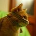 Gino, gatto ninja