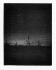 on the moors (bradley gaskin) Tags: bw white black blur film night polaroid iso3200 mono fuji gloomy australia eerie swamp adelaide instant marsh sa moor yoyo oof deadtrees gofigure packfilm portadelaide fp3000b autaut alandscape mosquitohellhole enroutetogardenislandboatramp inportraitorientation sosomanymosquitoesthere