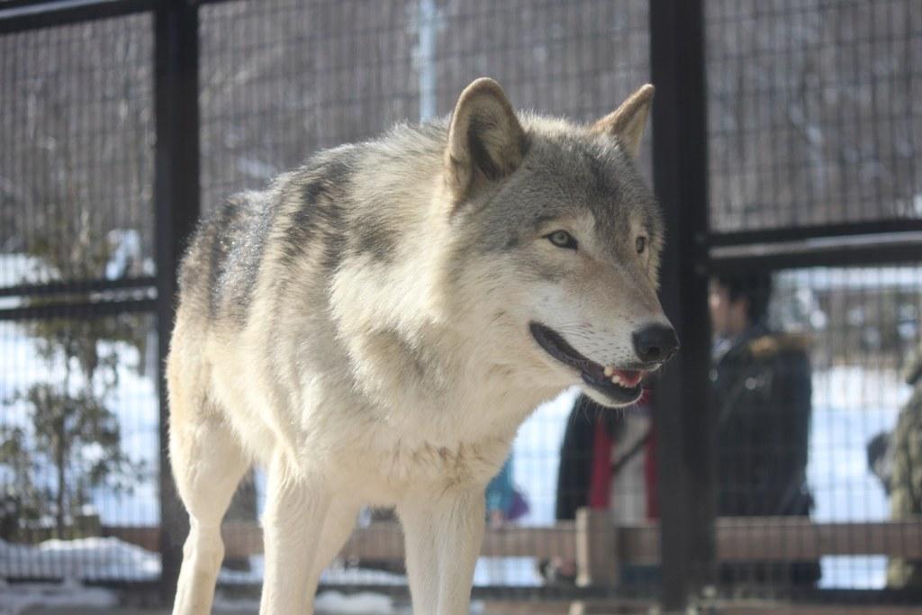 Sapporo Maruyama Zoo (27)