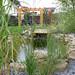 Zahradní jezírka a vodoteče
