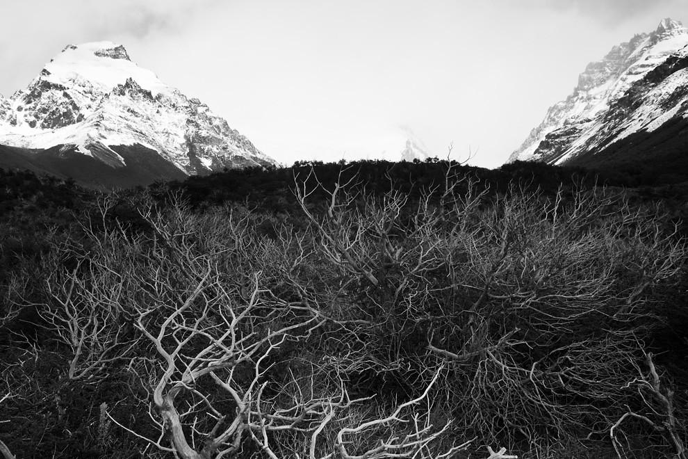 Si la vida se te presenta como una valle de espinas, consigue un buen machete. Valle del Cerro Torre. (Guillermo Morales -  Patagonia, Argentina)