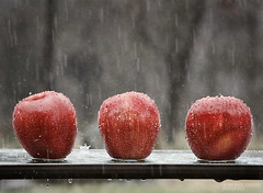 Week of March 6, 2011 (drdesigns) Tags: red apple wet rain outside 350d interesting drip getty rebelxt pour 28135mm 952 drdesigns artistpickmay11
