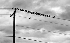 Cloudy (babymowgli16) Tags: sky blackandwhite birds silhouette clouds wire power telephone line pole goldenratio top20blackandwhite