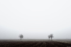 Fog trees (Nick-K (Nikos Koutoulas)) Tags: trees fog greek alone nikos greece nickk       gvr1 koutoulas