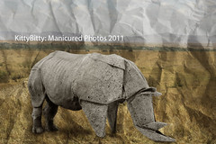 Rhino Path (KittyBitty: Manicured Photos) Tags: toronto ontario canada photoshop paper zoo origami kitty australia melbourne rhino hoof rhinoceros hooves bitty manicured fabiancorrea kittybitty1 kittybitty origamiarhino paperrhino manicuredphotos