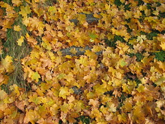 """Efterårsfarver • <a style=""""font-size:0.8em;"""" href=""""http://www.flickr.com/photos/53551333@N05/5525914130/"""" target=""""_blank"""">View on Flickr</a>"""