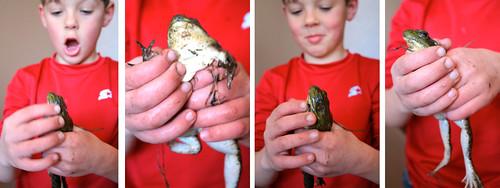 hisfrog