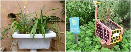 Plantas em lugares inusitados