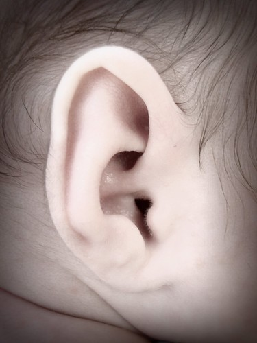 Bryce ear