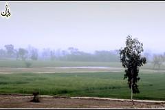 On the way of Lahore City via Moterway (early morning), Pakistan. (Othman Ch) Tags: pakistan tree way alone fields punjab lahore moterway pakistanipunjab 00965 choudhryuhotmailcom choudhryu choudhryuyahoocom 0096594418559 94418559 96594418559