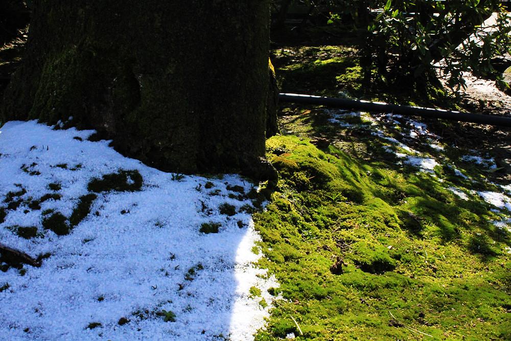 木陰に残る雪