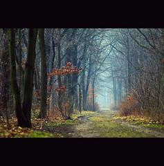 zaunfrei (~janne) Tags: park mist tree nature forest vanishingpoint nebel natur olympus wald baum janne 135mm janusz fluchtpunkt elmaritr e520 ziob