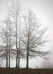 And a lot of fog again ... (rotraud_71 away again ~) Tags: trees fog bench austria earlyspring salzburgerland baddrrnberg