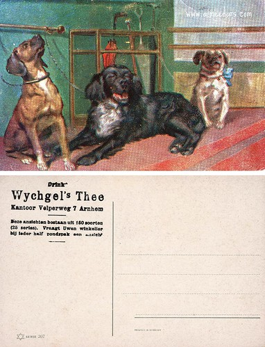 Three Dogs (Wychgel's Thee)