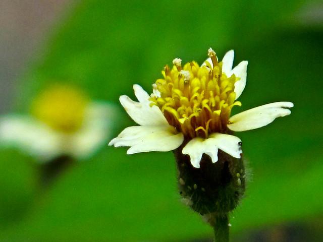 IMG_1351 flower