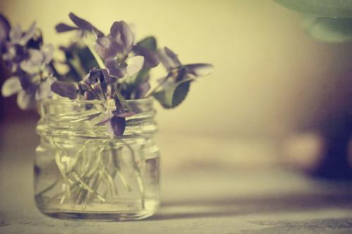 Violettes...