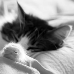 shhhhh,.... (Color-de-la-vida) Tags: cat chat gato 40d colordelavida mellamosky