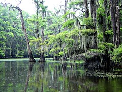 Caddo Lake project offers April 7 community meeting, blog and Facebook page