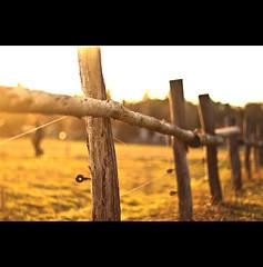 sommerliches (~janne) Tags: light sun berlin 50mm licht spring dof feld olympus zaun sonne janne wetzlar frühling dahlem fense leitz janusz domäne summiluxr e520 ziob