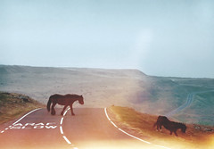 (mister sullivan) Tags: road uk horses mountain animals wales flare mister sullivan brecon valleys