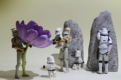 Playing hide and Seek (Kalexanderson) Tags: stilllife flower toys starwars rocks looking son hideandseek troopers clones stormtrooper fatherandson clone lookinginside lifting familylife clonetrooper runningaround tulpan ordinarylife clonetroopers miniclones couting ministormtrooper purpue 365daysofstormtroopers stormtrooperandson