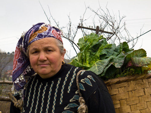 Woman picking cabbages