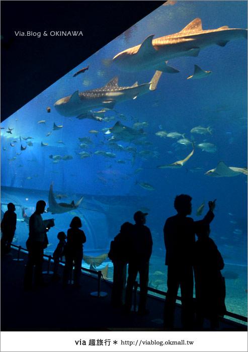 【沖繩景點】美麗海水族館~帶你欣賞美麗又浪漫的海底世界!22